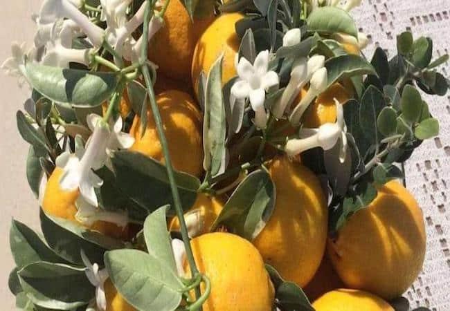 events - lemon composition