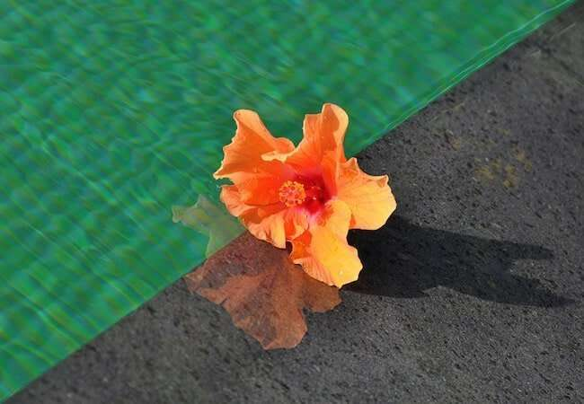 hibiscus detail in the pool of the gabbiano relais stromboli